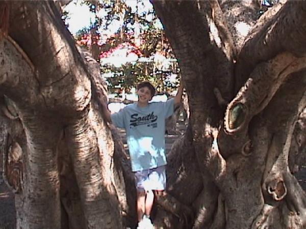 jax full at banyan.jpg