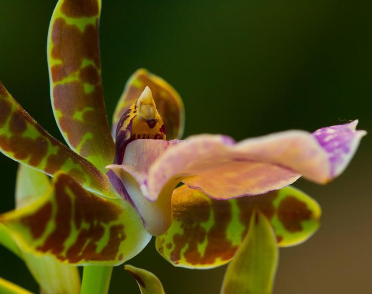 orchidman8222.jpg