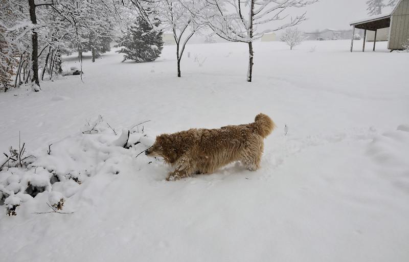 Snow days! Jan 17-18, 2018