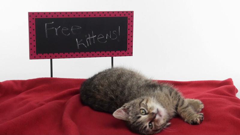 kitten_633_01.mov