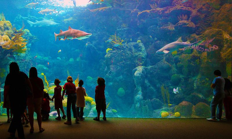 Children dazzled by the great Aquarium tank.