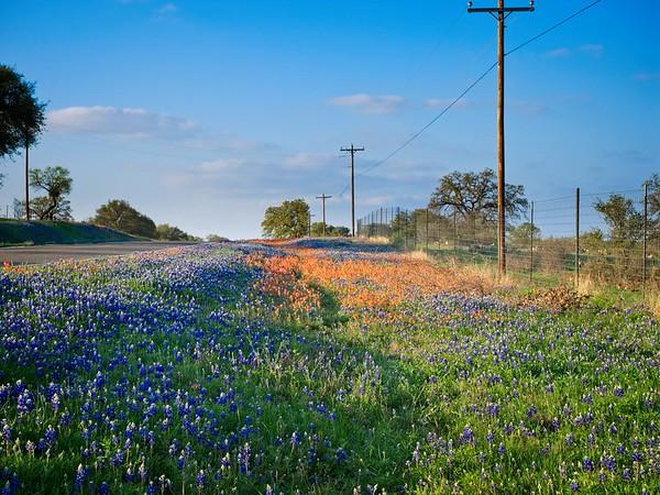 Wildflowers Llano 3.18.2017