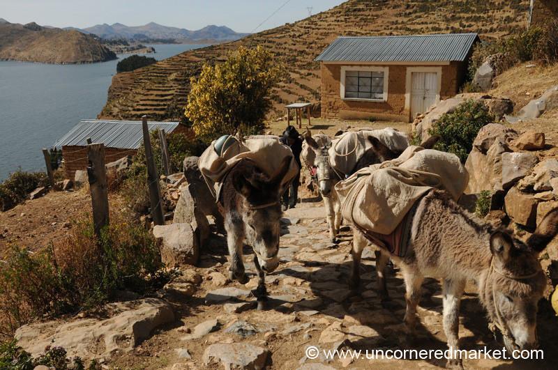 Donkeys Returning Home - Isla del Sol, Lake Titicaca, Bolivia