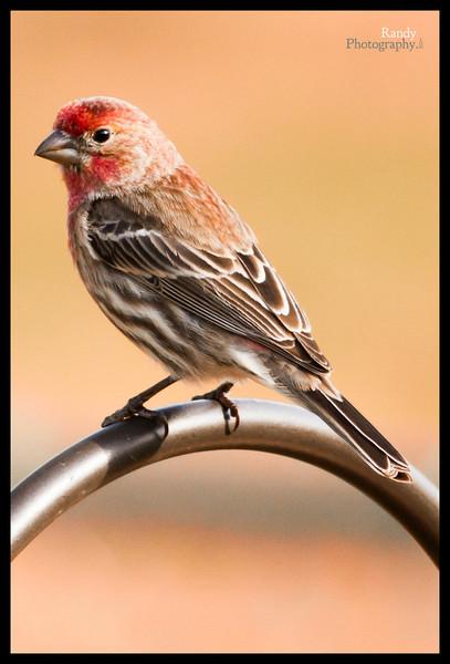 Birds of March
