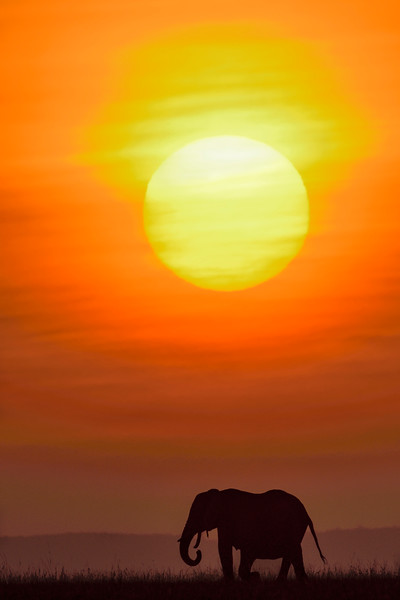 Morning-in-paraidse-elephant-sunrise-Masaimara-1.jpg
