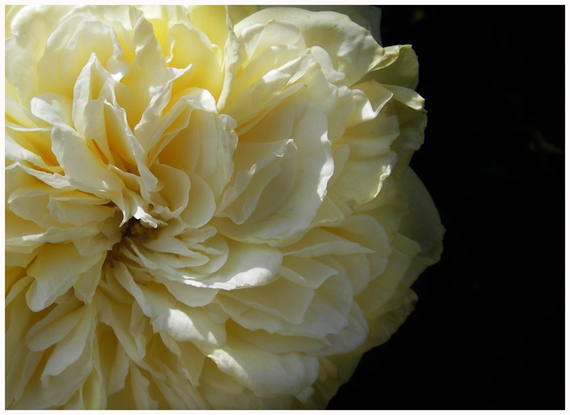 FS 06-05 roseto Fineschi 038.jpg