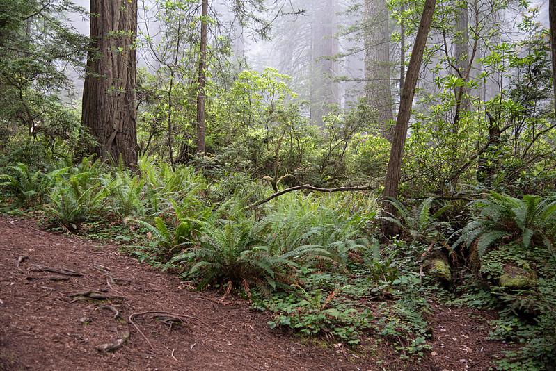 redwoodsFin29-1233.jpg