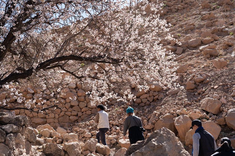 Spring in M'goun Valley