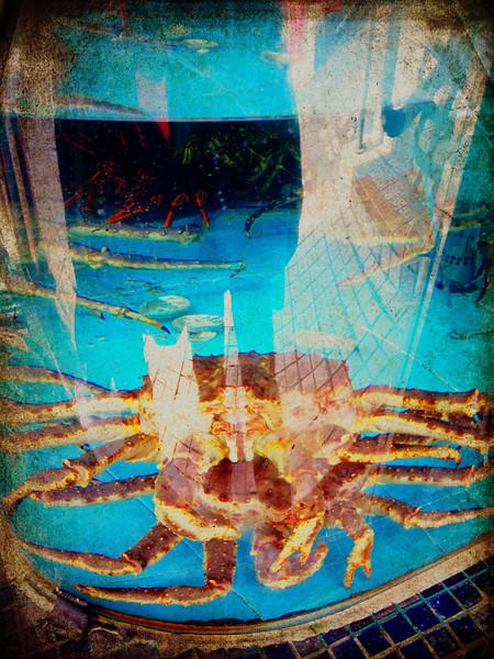 Sea-Food, See-Me...