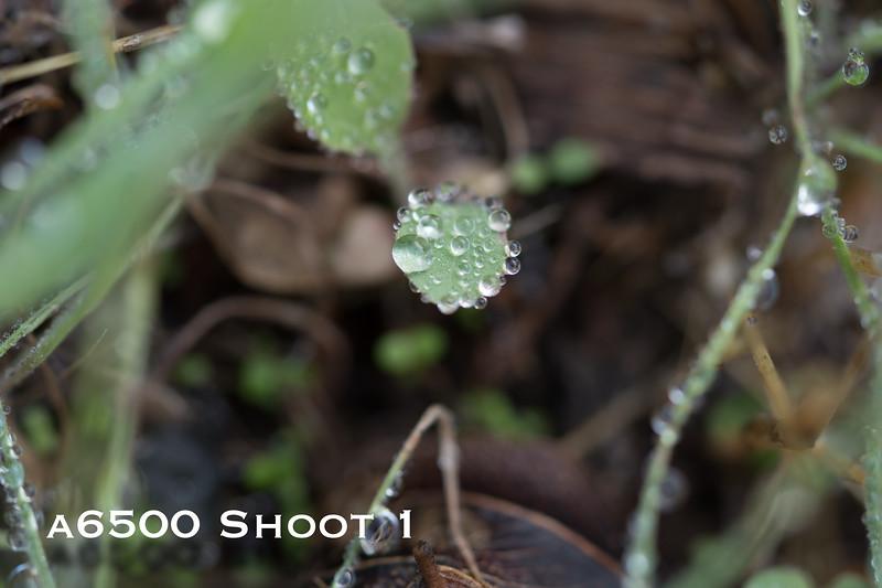 a6500 macro - Shoot 1-14.jpg