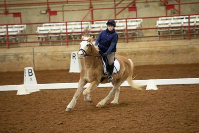 Horse 388