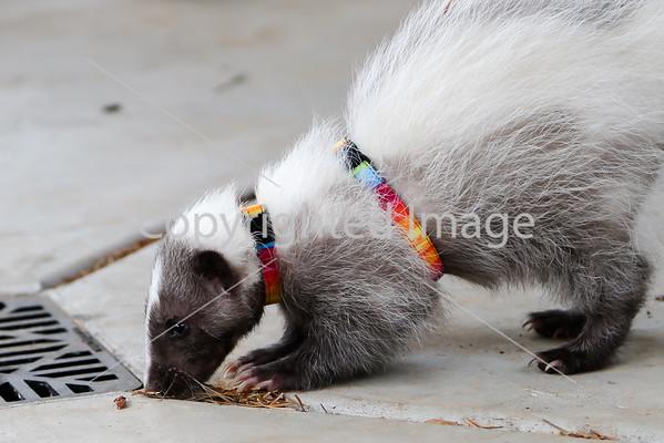 ORDER PRINTS: Sloth Sanctuary