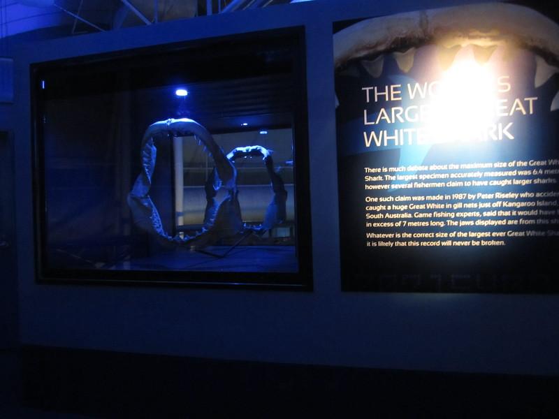 Sydney - Sydney Aquarium-36.JPG