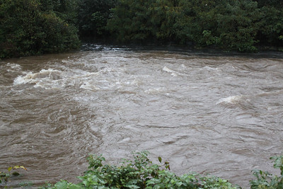 High Waters, Ducks, Little Schuylkill River, Tamaqua (9-23-2011)