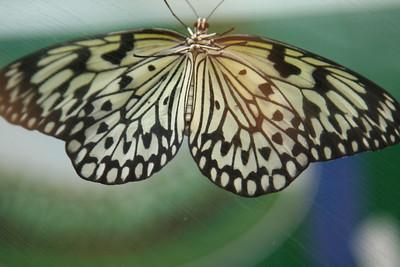 Victoria Butterfly Garden and Oregon Coast - Dec - 2014