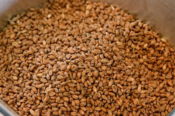 AGU Brew Day - Am Am Wheat 20g