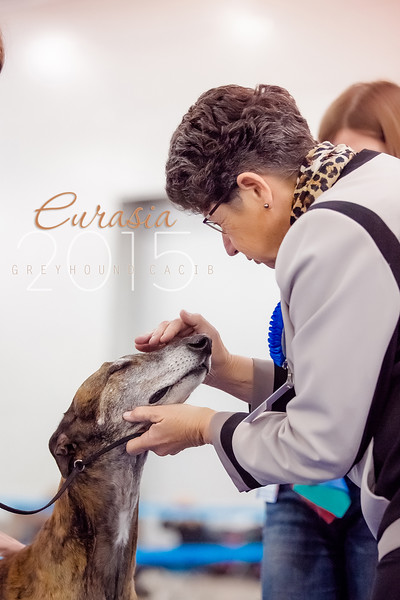 Eurasia 2015 greyhounds