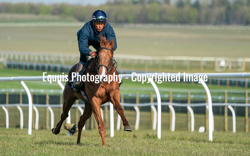 Guineas Breeze Up Practice Day