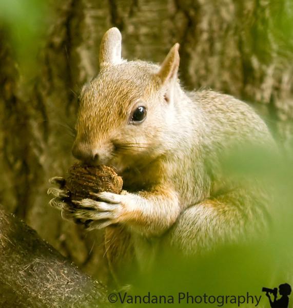 Squirrels !