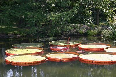 Sept 17, 2006- Stonecrop Gardens, Cold Spring, NY