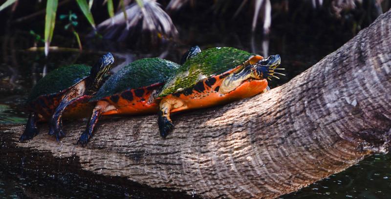 2011 Green Cay Nature Center-8940.jpg
