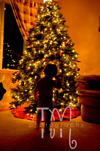 Taryn & the Tree | 12.20.11