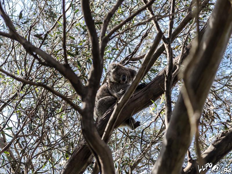 Australia-345.jpg