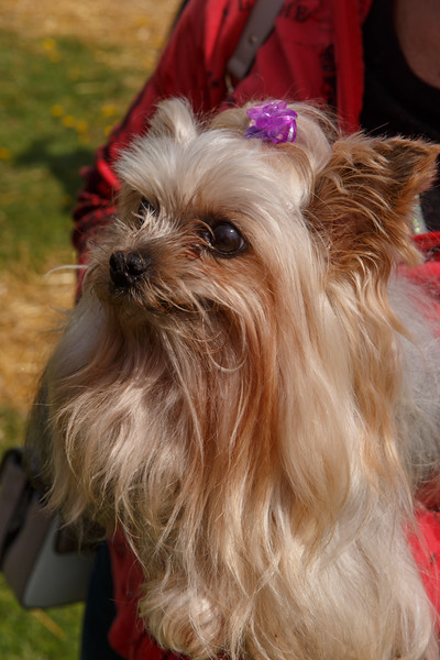 East Minster Dog Show May 5, 2019