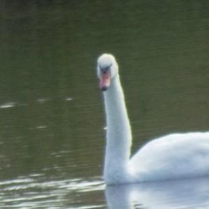 Swam-13Sept2014