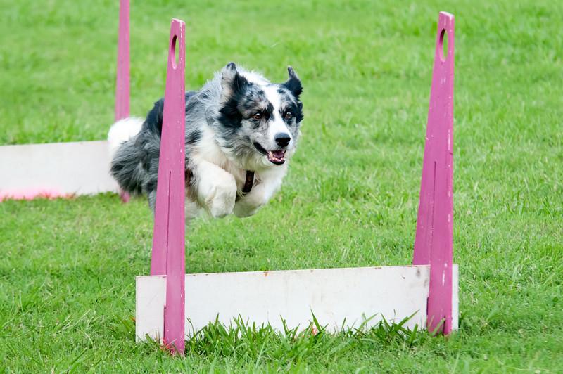 2011 Bark in the Park-111.jpg
