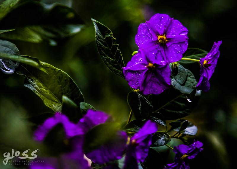 gloss photography studios ©-654.jpg