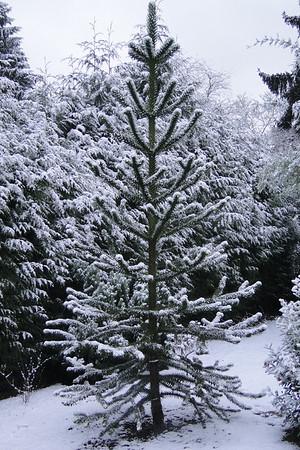 2012 - January  Snow