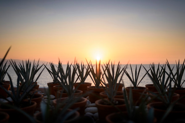 Miercoles   Garza Blanca, Mousai, Hyatt, Villa Premier, Luna Liquida, Now Amber and Secrets, Sunscape, Crown Paradise