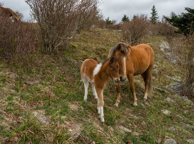 219 Apr 28 Mare and Foal-1.jpg