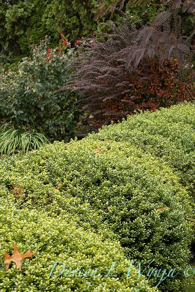 Dietrick fall garden_2035.jpg