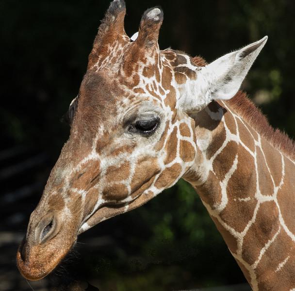 Reid Park Zoo 10-16-2012b.jpg