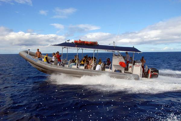 KoOlina Dolphin Tour
