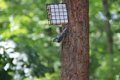 Birds 20130730