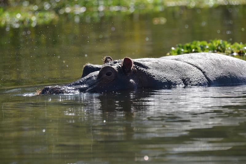 East Africa Safari 143.jpg