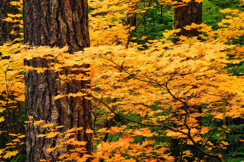 ~Autumn's Embrace~