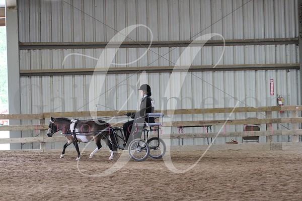 Pony Driving/ Pony Reinsmanship