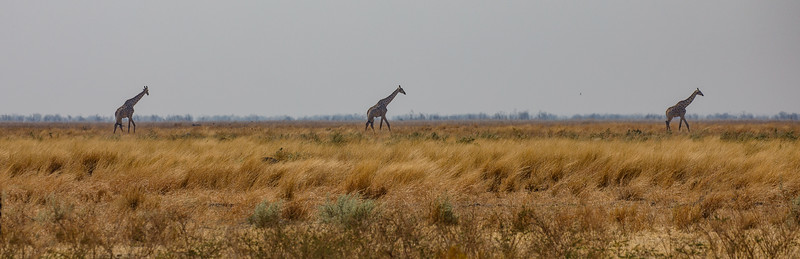 Botswana_0818_PSokol-2918-Edit.jpg