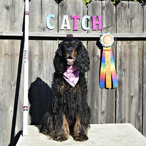 C-ATCH Zelda -- Sept 2015