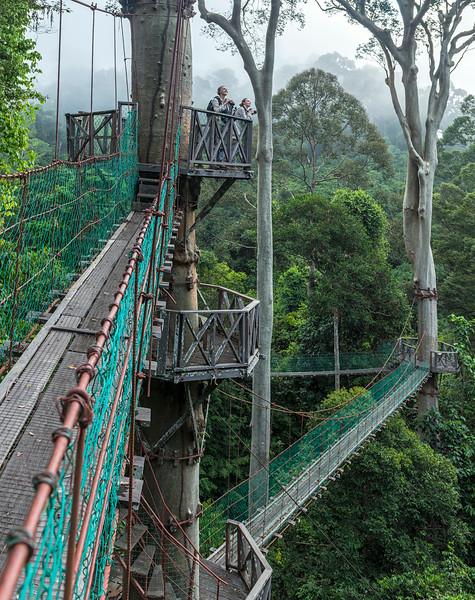 Borneo Rainforest Lodge 5-9-18132421.jpg