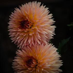 September 2017 flowers