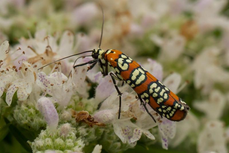 Mitchell Memorial moth (1 of 1).jpg