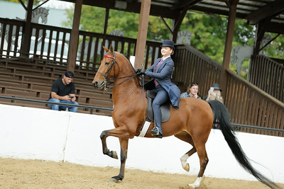 22.Saddle Seat Equitation open to all ages