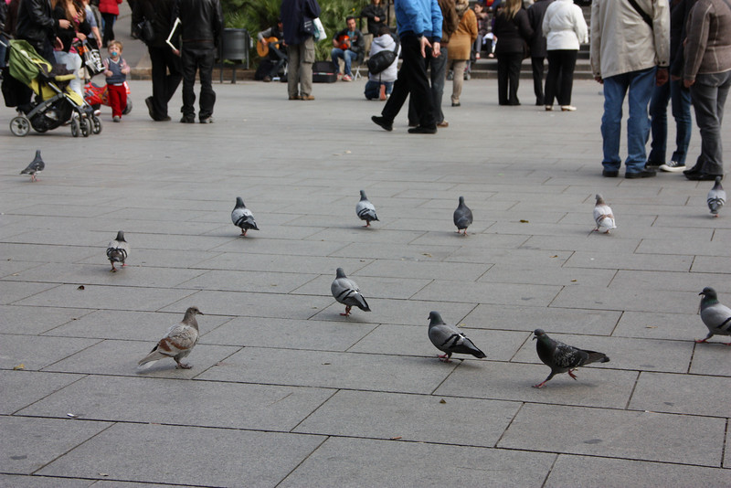 I guess Jared liked the pigeons.