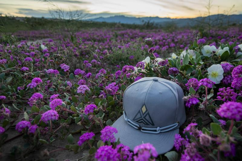 20190228_Anza Borrego Wild Flowers_0804.jpg