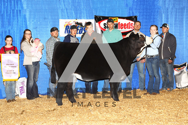 2016 Youth Steer Backdrop